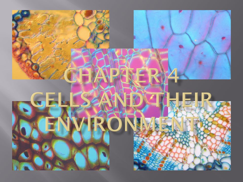 Chapter 4 Cells and Their Environment