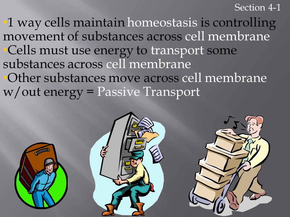 Section 4-1 1 way cells maintain homeostasis is controlling movement of substances across cell membrane.