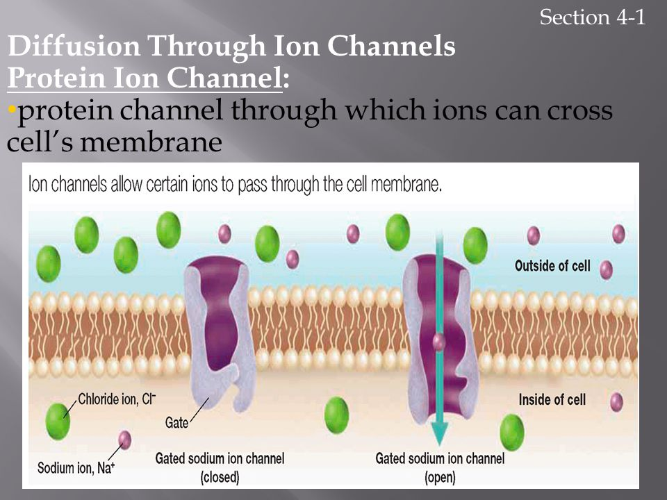 Diffusion Through Ion Channels Protein Ion Channel: