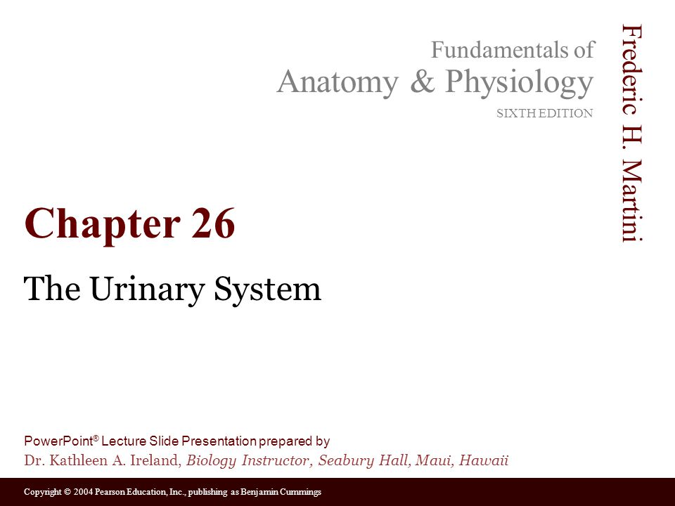 Chapter 26 The Urinary System. - ppt video online download