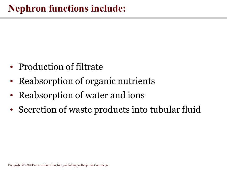 Nephron functions include: