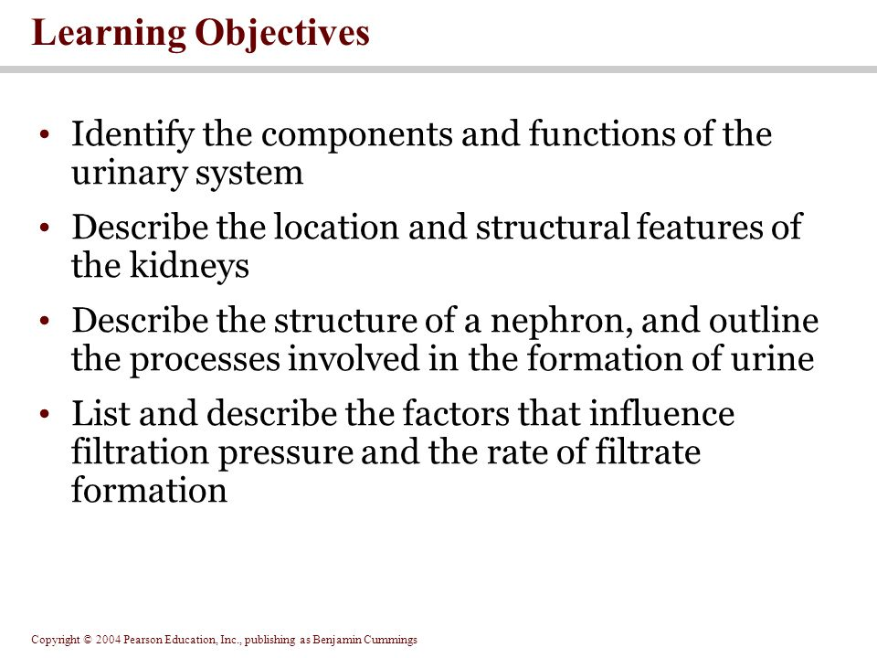 Learning Objectives Identify the components and functions of the urinary system. Describe the location and structural features of the kidneys.
