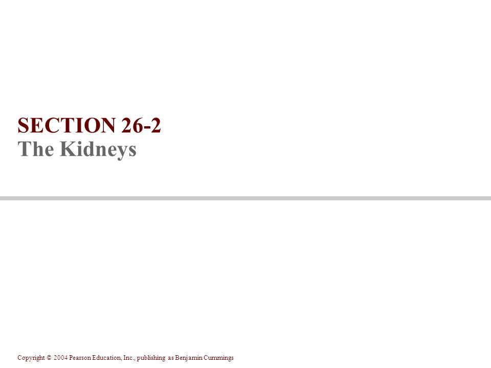 SECTION 26-2 The Kidneys