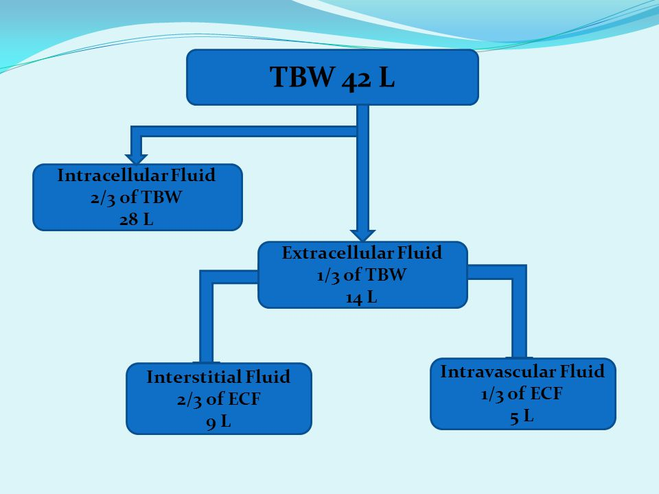 TBW 42 L Intracellular Fluid 2/3 of TBW 28 L Extracellular Fluid