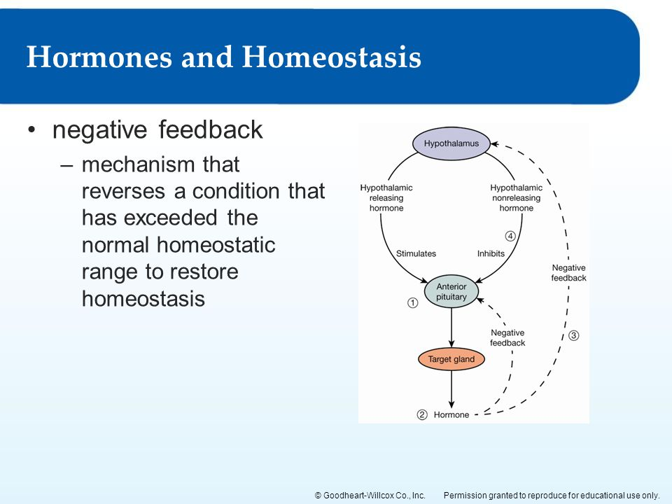 Hormones and Homeostasis
