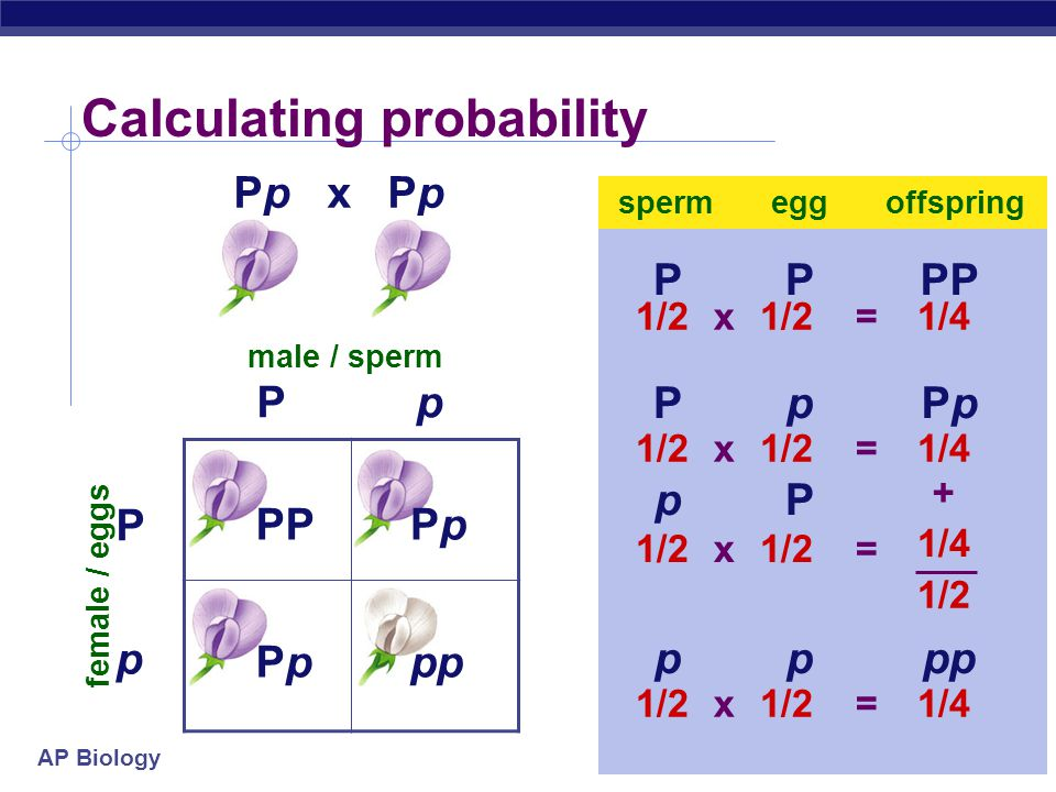Calculating probability