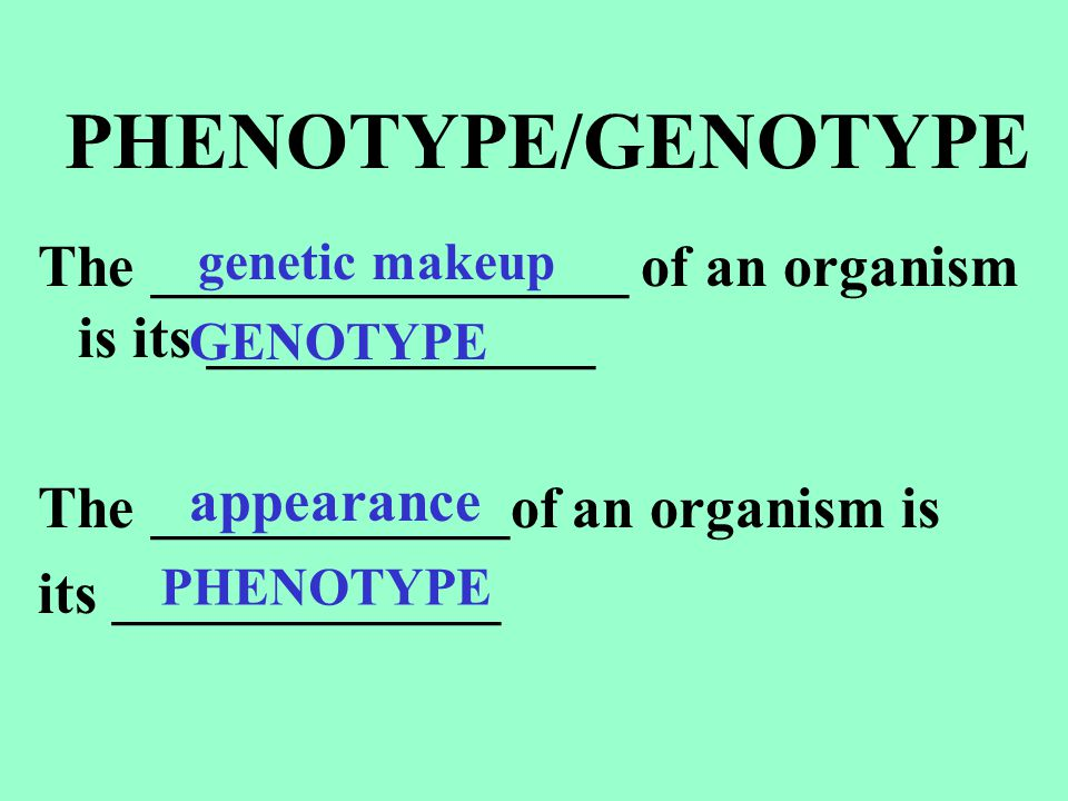PHENOTYPE/GENOTYPE The ________________ of an organism is its _____________. The ____________of an organism is.