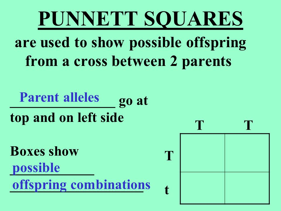 PUNNETT SQUARES are used to show possible offspring from a cross between 2 parents. _______________ go at.