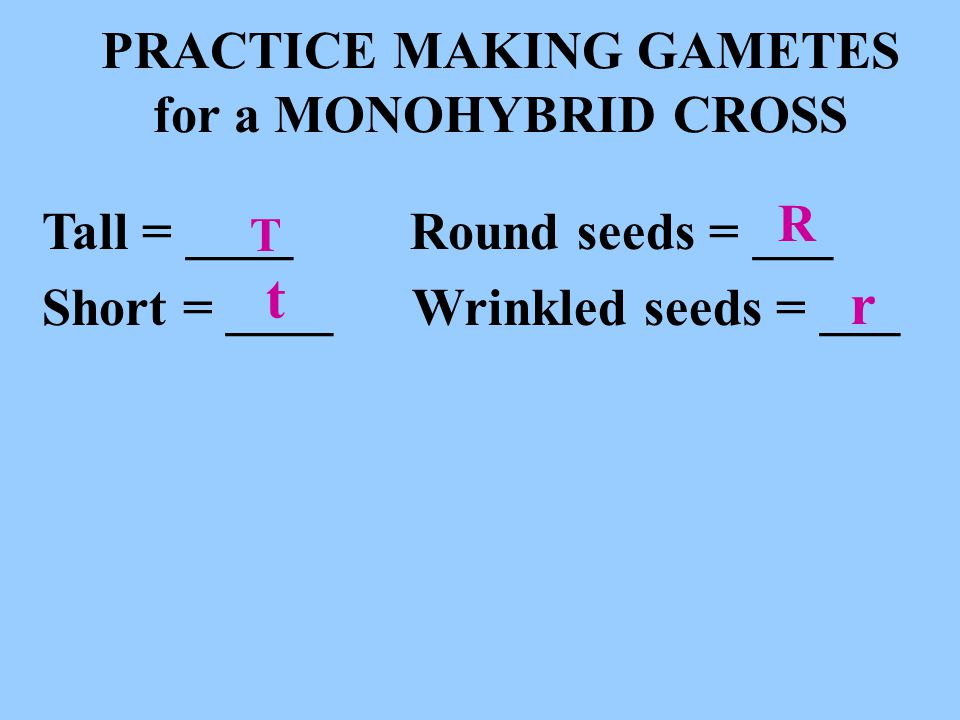 PRACTICE MAKING GAMETES for a MONOHYBRID CROSS