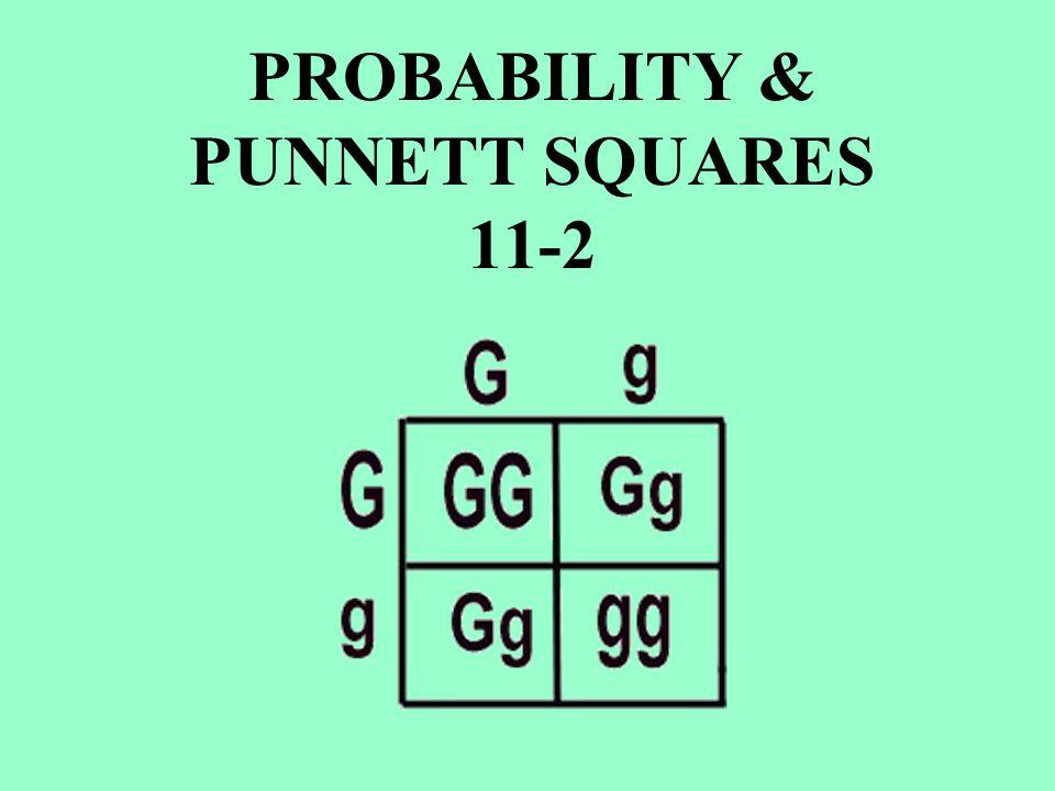PROBABILITY & PUNNETT SQUARES 11-2