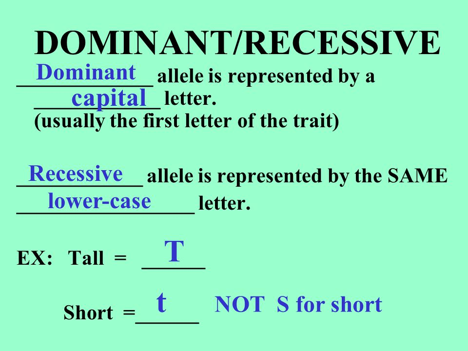 DOMINANT/RECESSIVE T t capital Dominant Recessive lower-case