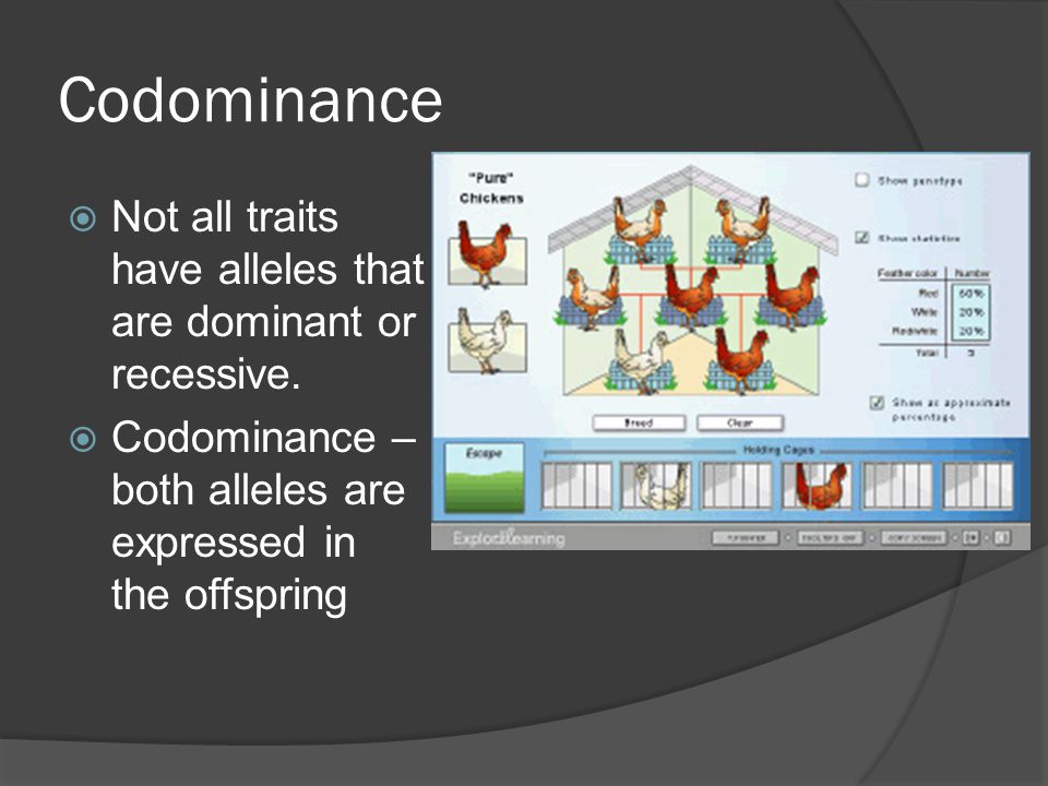 Codominance Not all traits have alleles that are dominant or recessive.