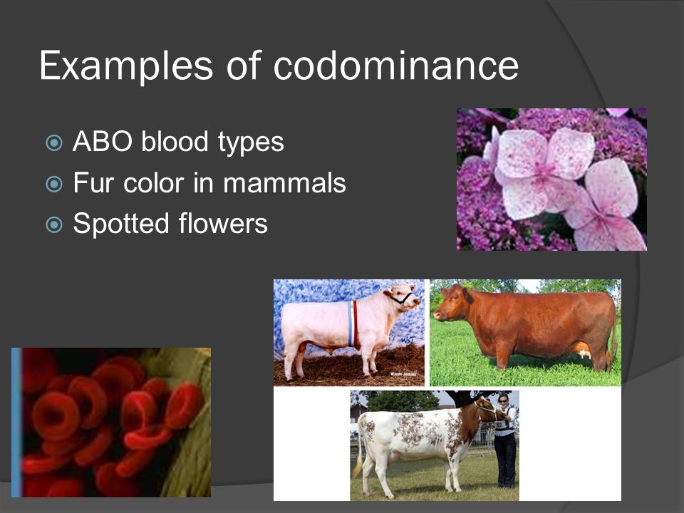 Examples of codominance