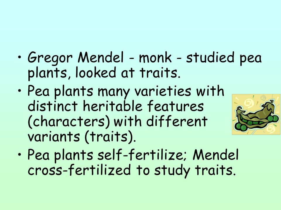 Gregor Mendel - monk - studied pea plants, looked at traits.