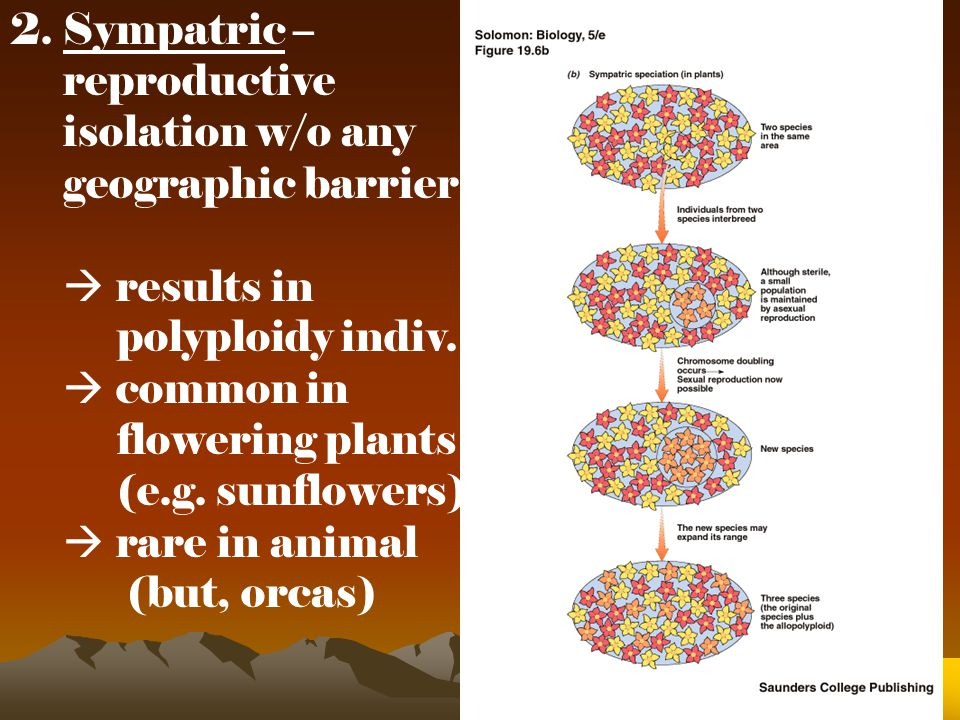 2. Sympatric – reproductive. isolation w/o any. geographic barrier.  results in. polyploidy indiv.