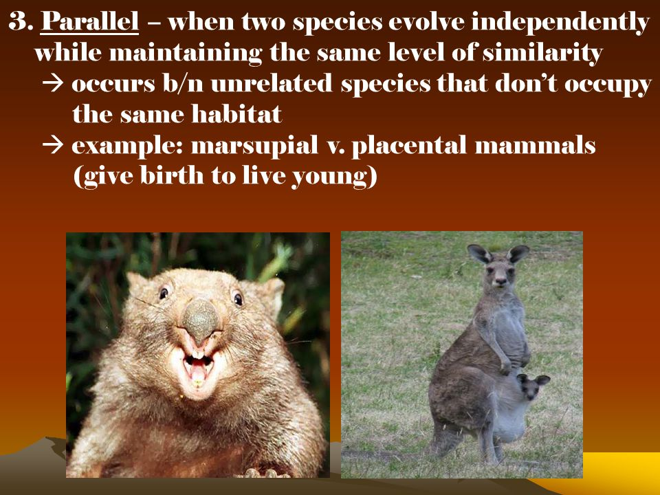 3. Parallel – when two species evolve independently
