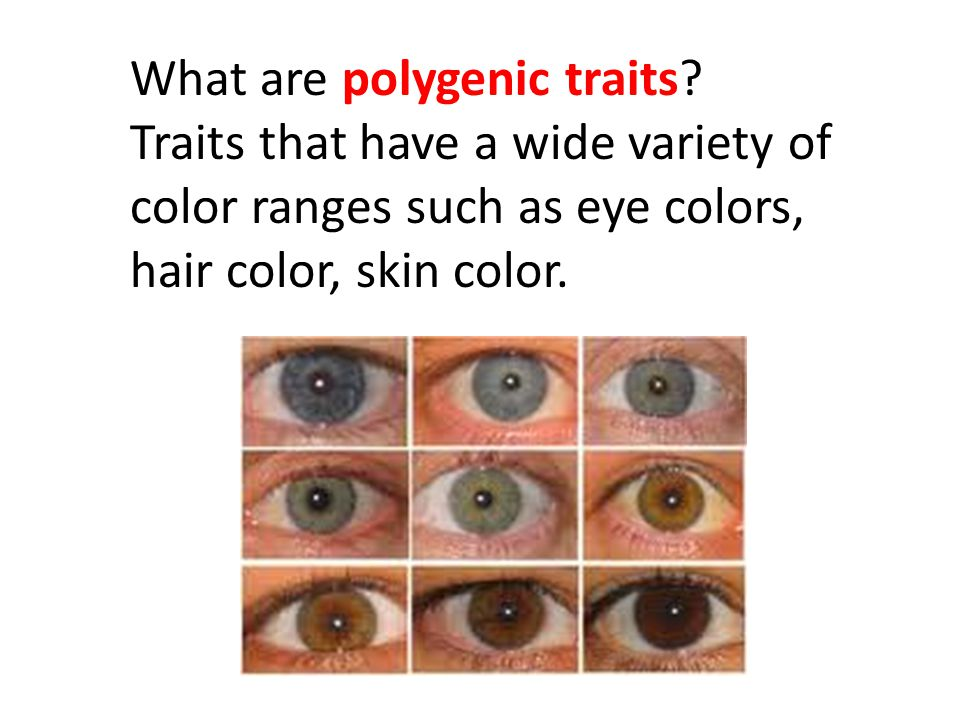 What are polygenic traits