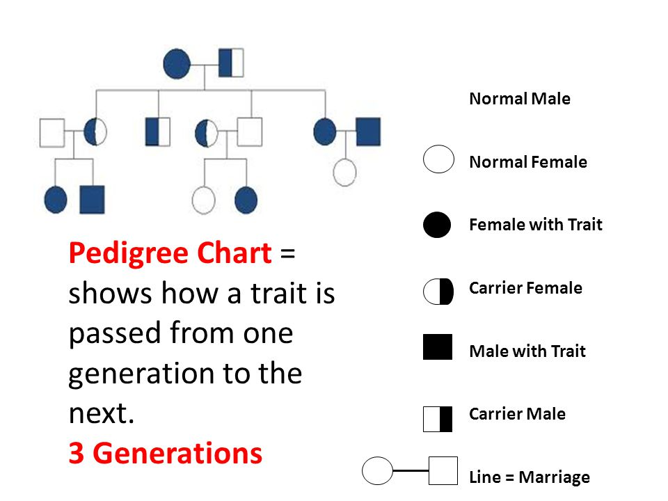 Normal Male Normal Female. Female with Trait. Carrier Female. Male with Trait. Carrier Male. Line = Marriage.