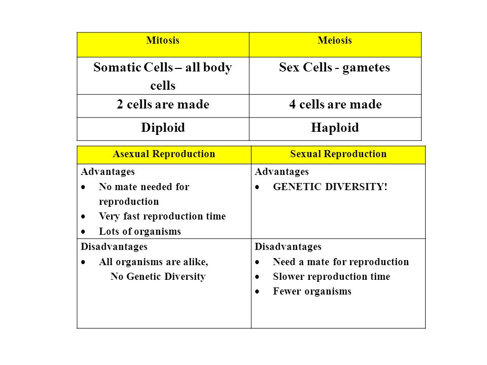 Somatic Cells – all body cells