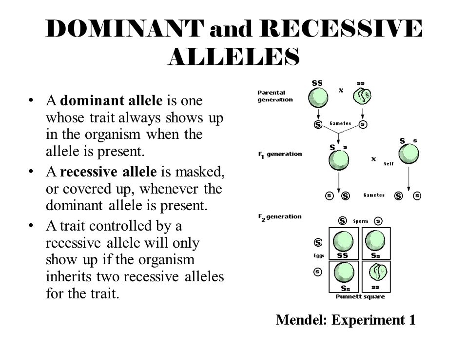 Dominant And Recessive Alleles Chart REPRODUCTION and GENET...
