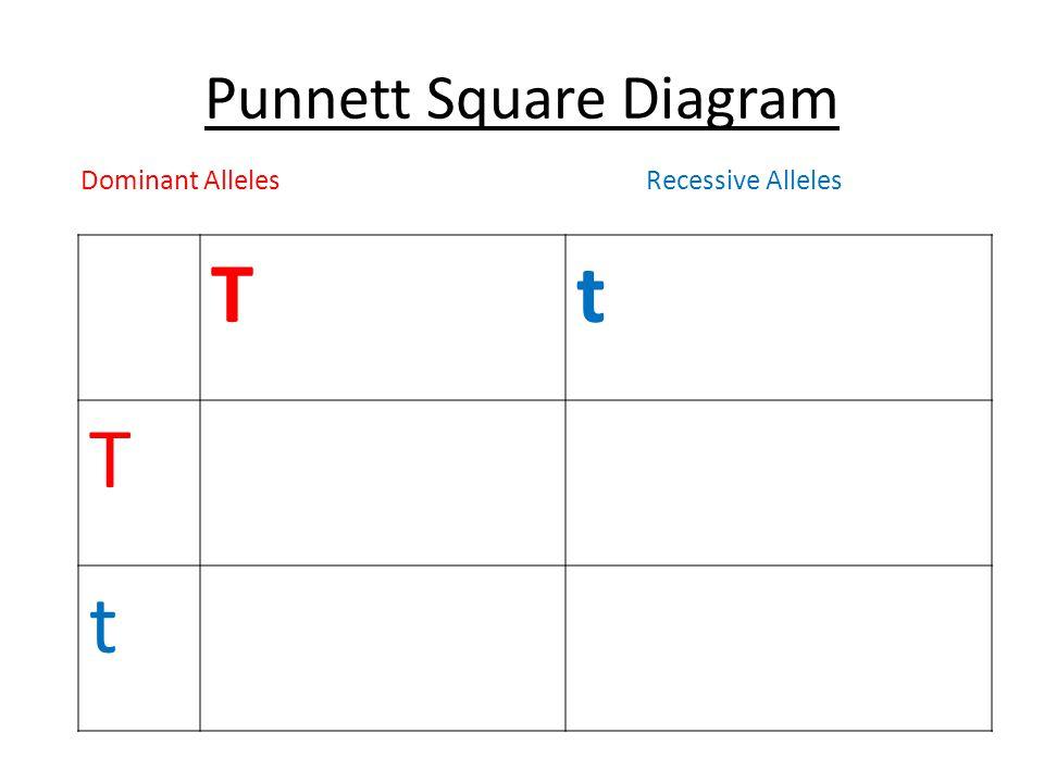 Punnett Square Diagram