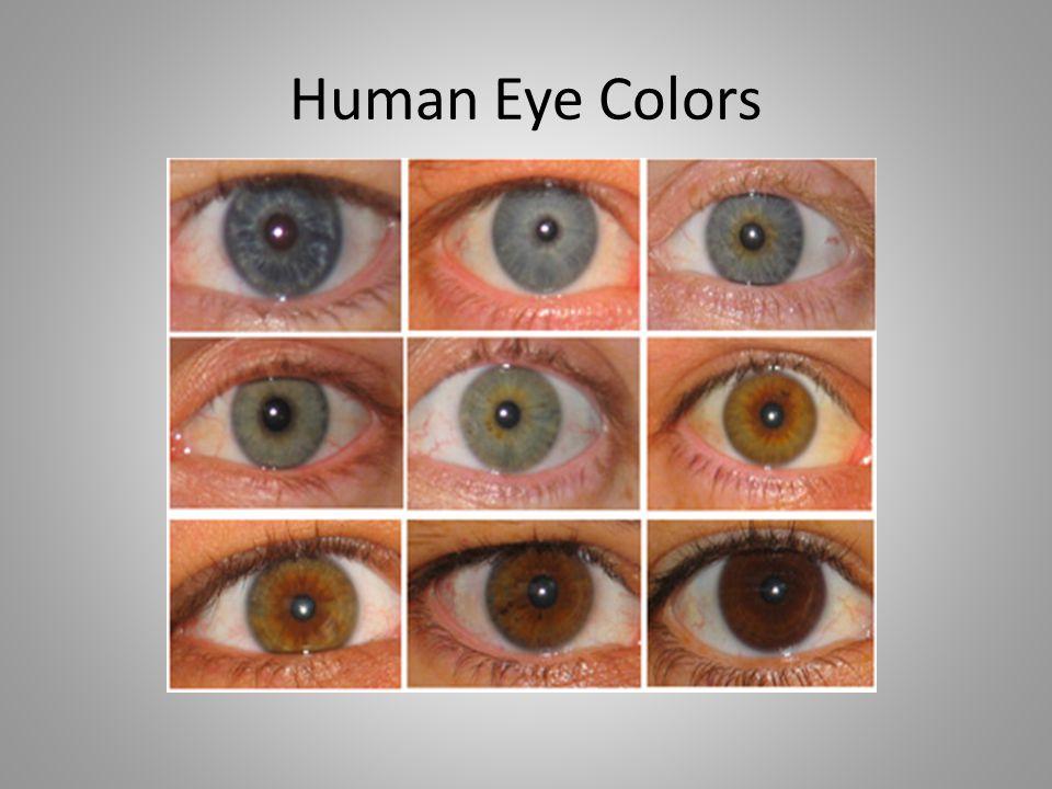 Human Eye Colors