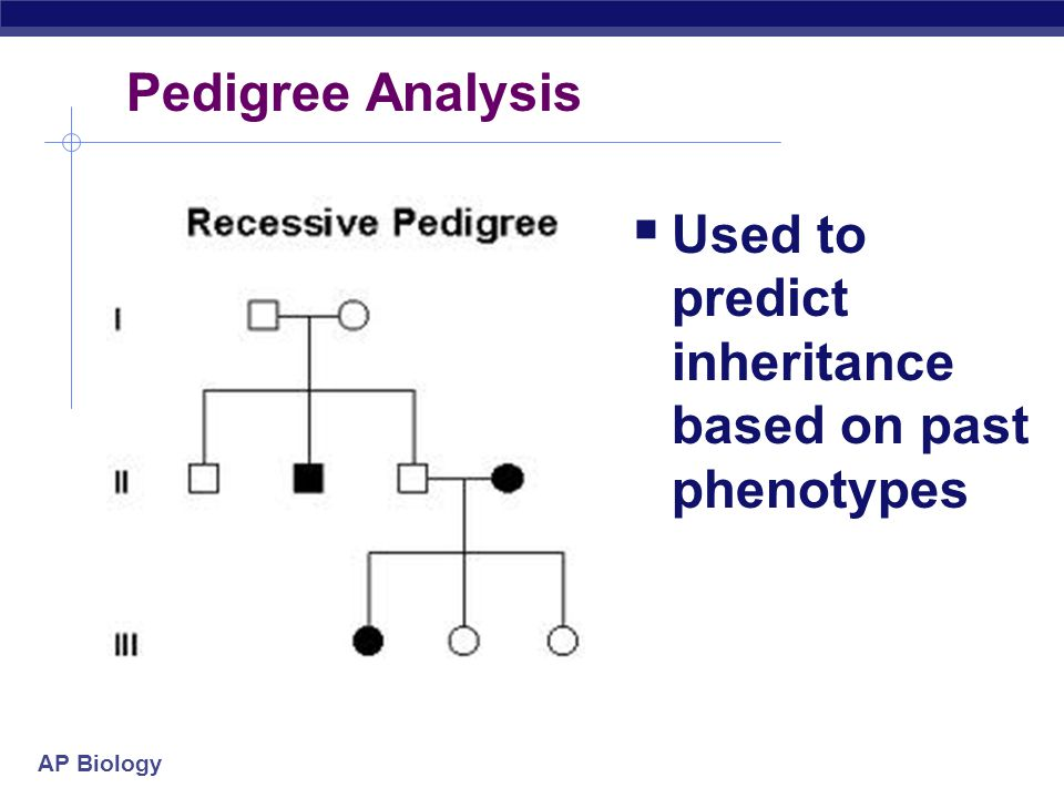 Pedigree Analysis Used to predict inheritance based on past phenotypes
