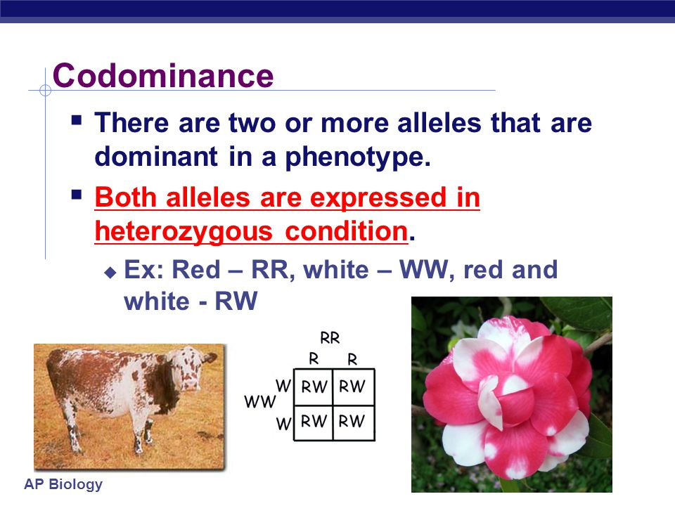 Codominance There are two or more alleles that are dominant in a phenotype. Both alleles are expressed in heterozygous condition.