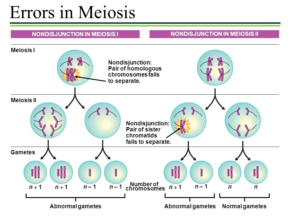 Errors in Meiosis NONDISJUNCTION IN MEIOSIS I
