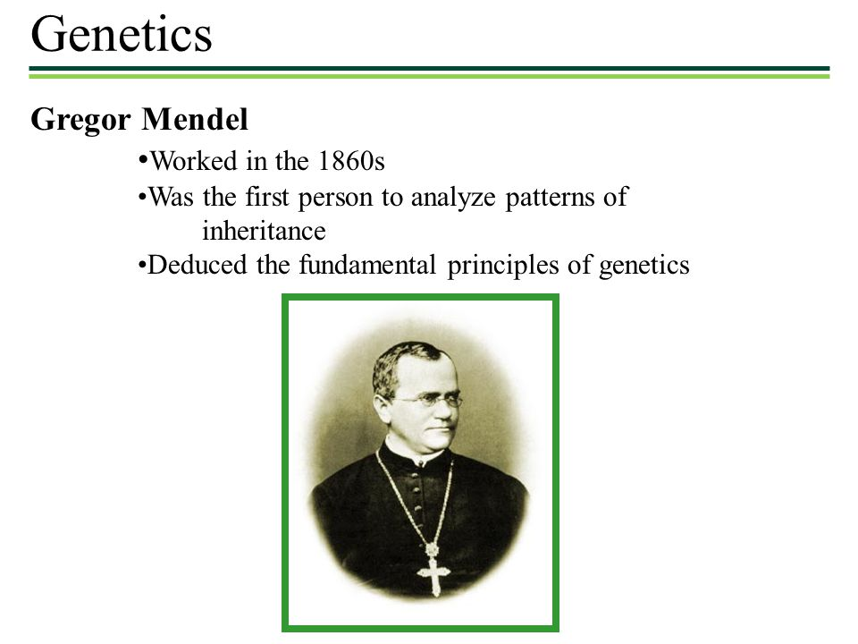 Genetics Gregor Mendel •Worked in the 1860s
