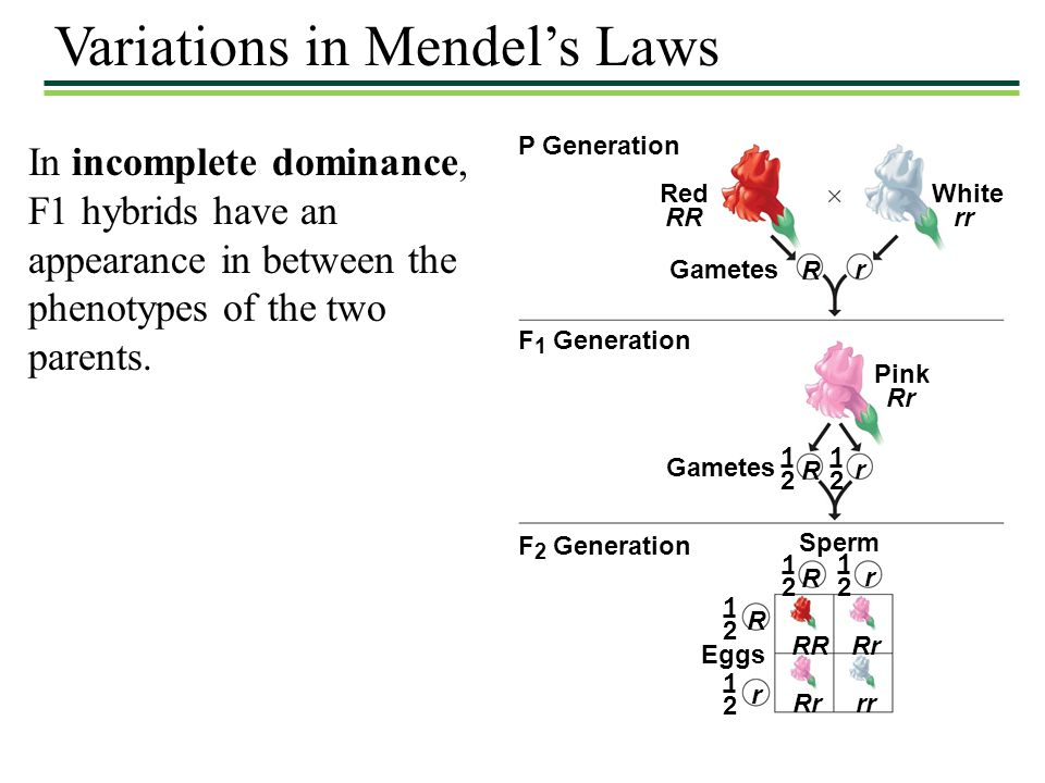 Variations in Mendel's Laws