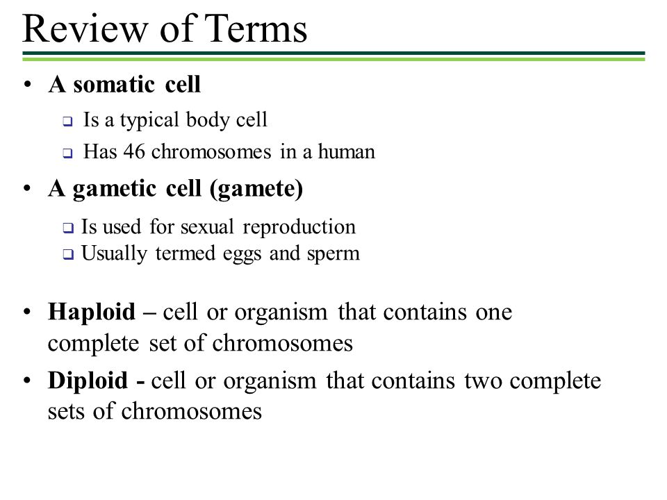Review of Terms A somatic cell A gametic cell (gamete)