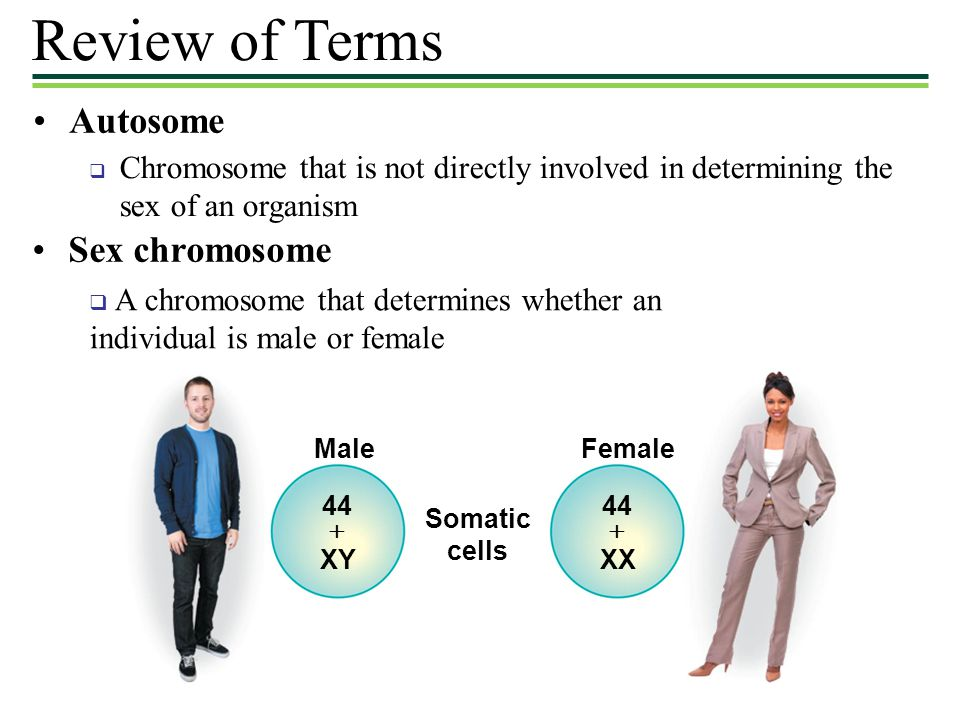 Review of Terms Autosome Sex chromosome