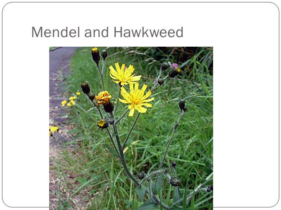 Mendel and Hawkweed