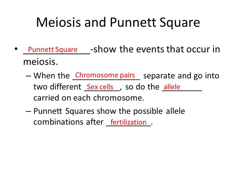 Meiosis and Punnett Square