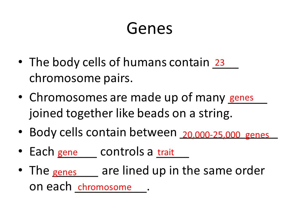 Genes The body cells of humans contain ____ chromosome pairs.