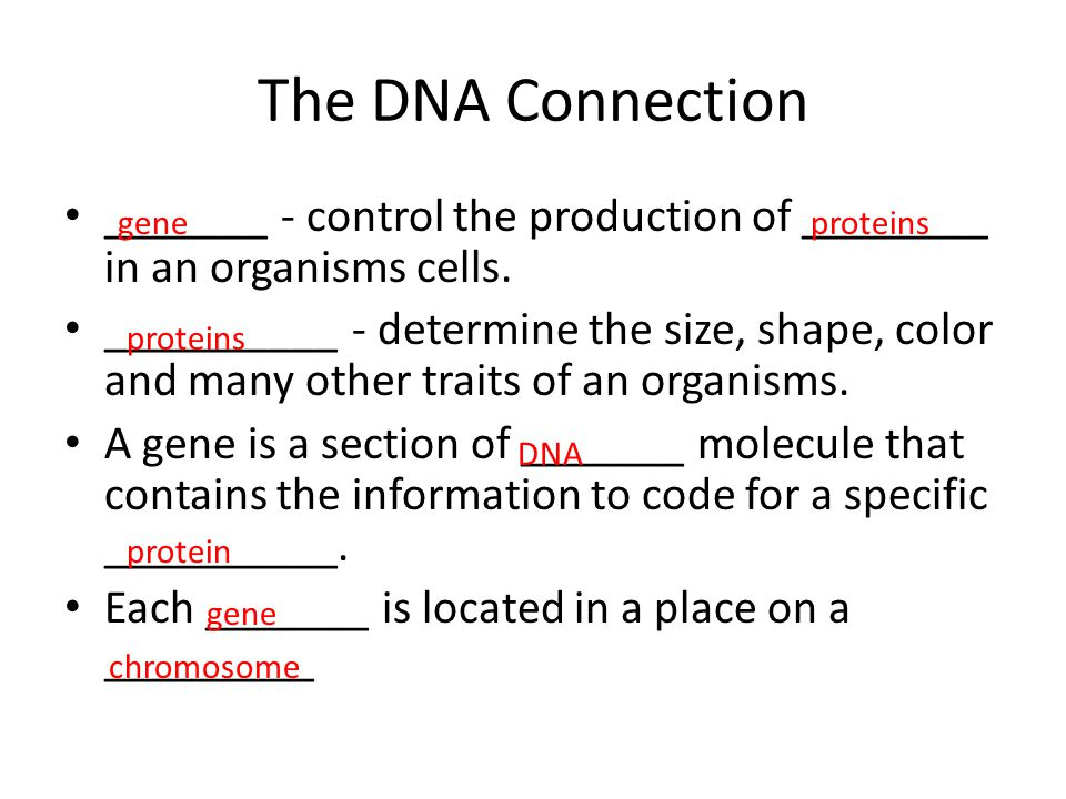 The DNA Connection _______ - control the production of ________ in an organisms cells.