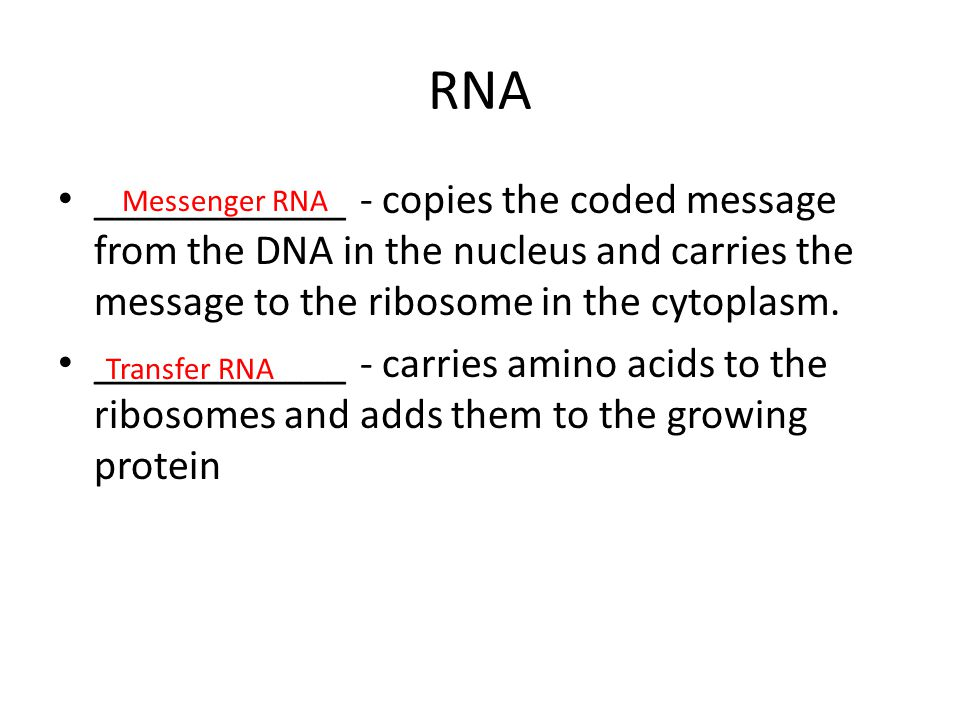 RNA ____________ - copies the coded message from the DNA in the nucleus and carries the message to the ribosome in the cytoplasm.