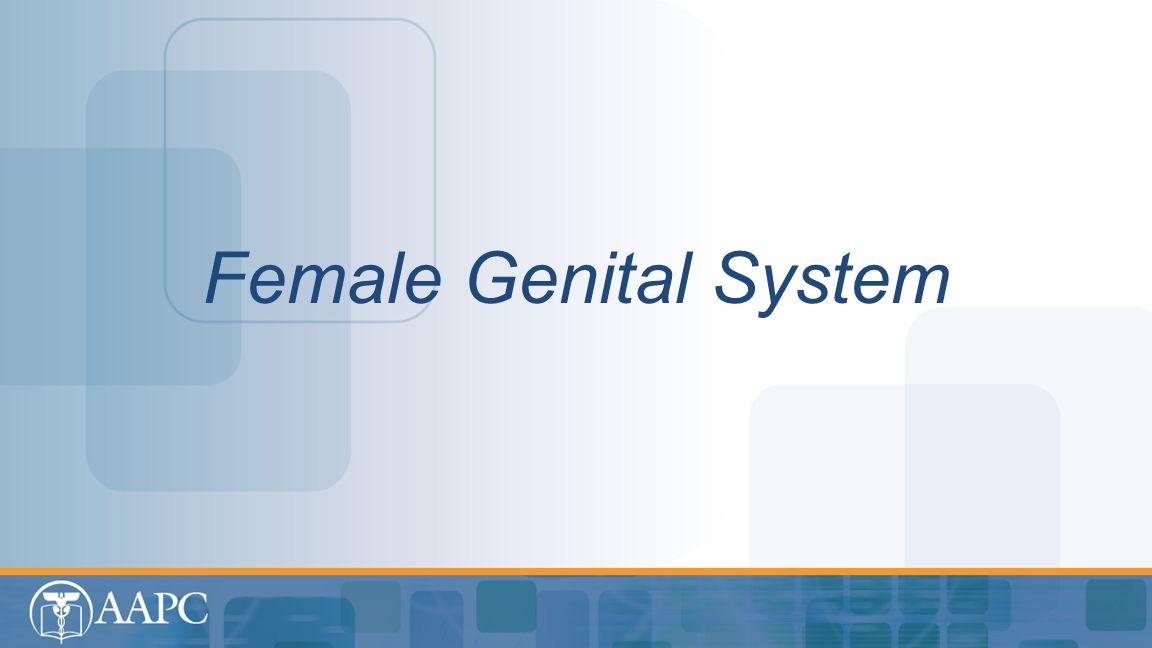 Female Genital System