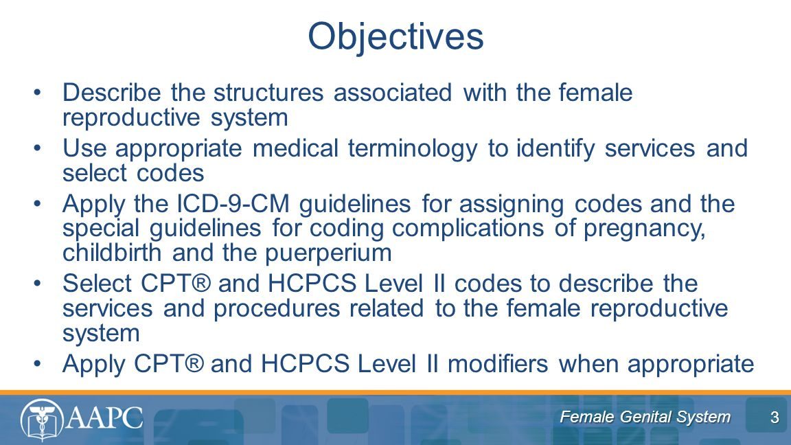 Objectives Describe the structures associated with the female reproductive system.