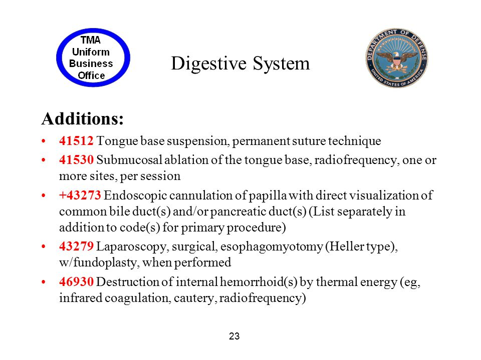 Digestive System Additions: