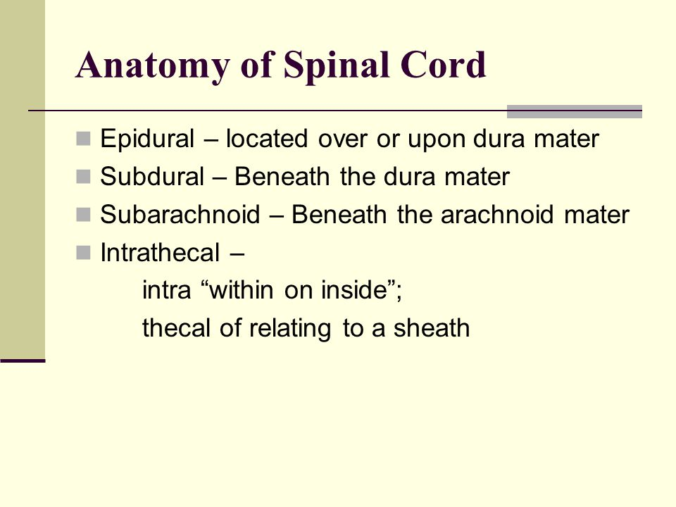 Anatomy of Spinal Cord Epidural – located over or upon dura mater