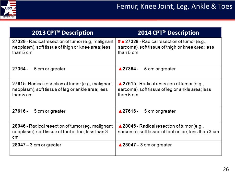 Femur, Knee Joint, Leg, Ankle & Toes