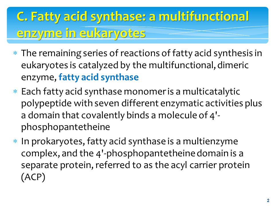 C. Fatty acid synthase: a multifunctional enzyme in eukaryotes