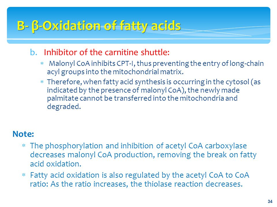 B- β-Oxidation of fatty acids