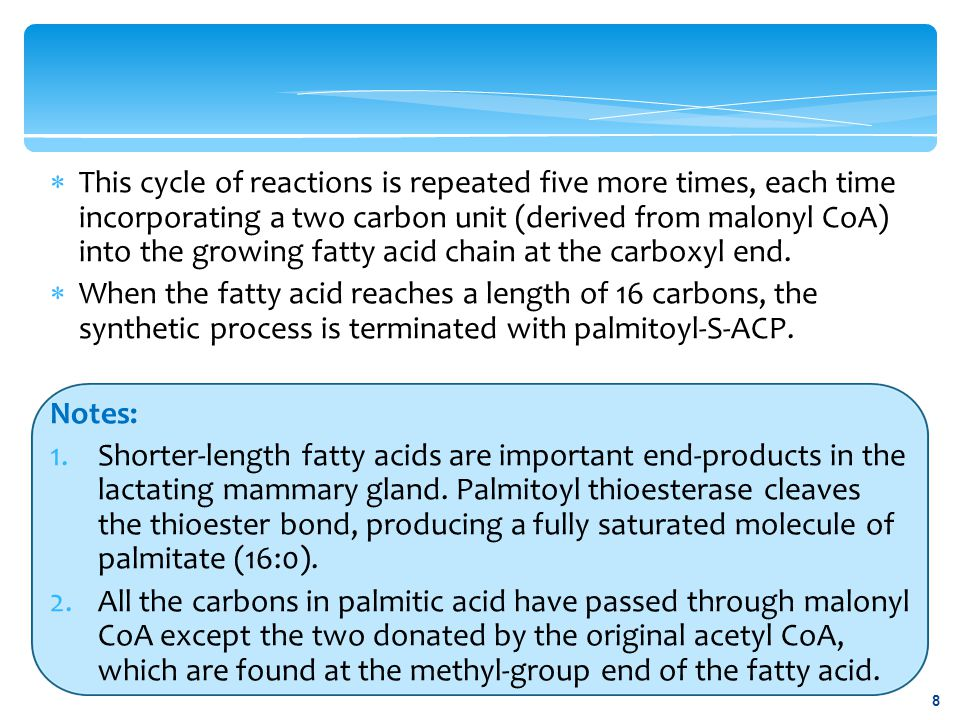 This cycle of reactions is repeated five more times, each time incorporating a two carbon unit (derived from malonyl CoA) into the growing fatty acid chain at the carboxyl end.
