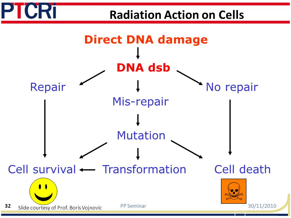 Radiation Action on Cells