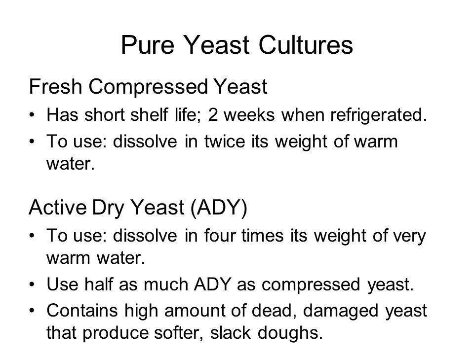 Pure Yeast Cultures Fresh Compressed Yeast Active Dry Yeast (ADY)