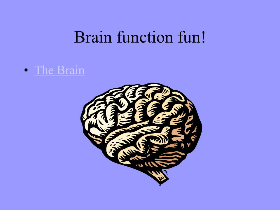 Brain function fun! The Brain