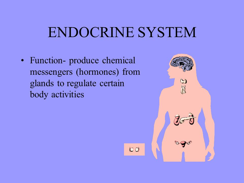 ENDOCRINE SYSTEM Function- produce chemical messengers (hormones) from glands to regulate certain body activities.